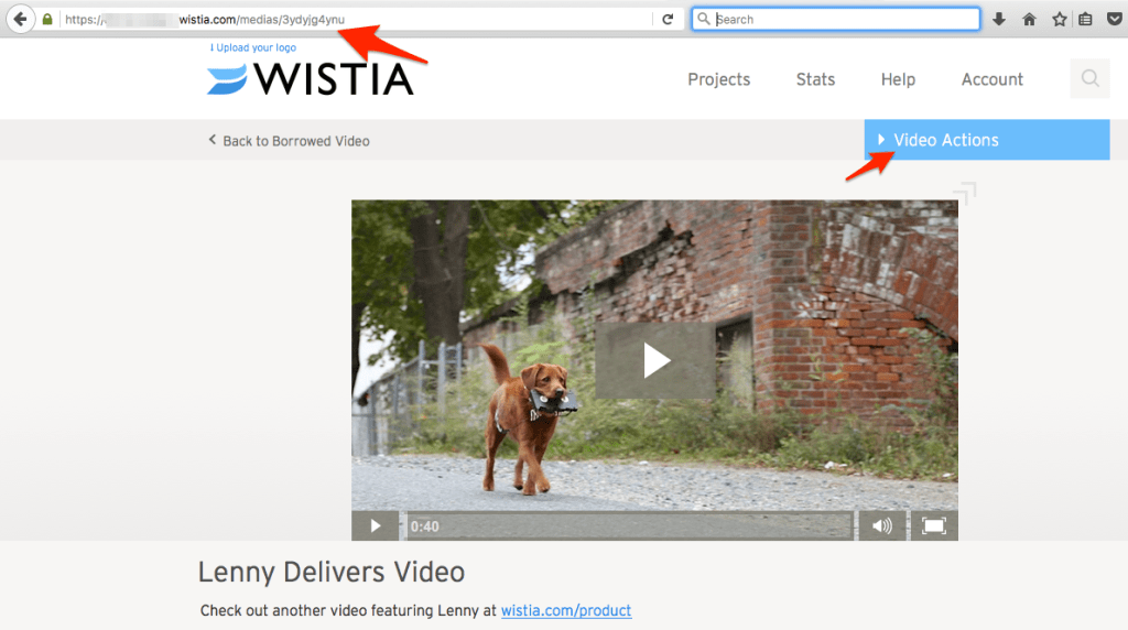 Lenny_Delivers_Video_-wisitia